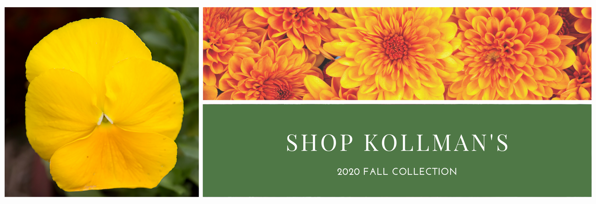shop fall flowers kollmans greenhouse twinsburg ohio